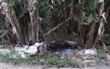 Nghi án - Điều tra - Khởi tố đối tượng giết người tình rồi ôm xác vứt ở vườn chuối