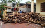 Bị phạt 100 triệu đồng vì che giấu vận chuyển gỗ lậu