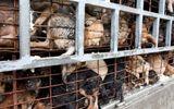 Video: Truyền hình nước ngoài sốc với nạn trộm chó ở Việt Nam