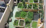 Thị trường - Cá tung tăng, rau xanh mướt trên nóc nhà