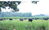 Thanh Hóa: Gần 3000 nghìn ha đất làm vùng nguyên liệu chế biến sữa