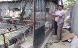 Bí quyết làm giàu - Anh thợ điện đổi đời nhờ nuôi lợn bằng thảo dược