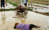 Cộng đồng mạng - Bức ảnh người cha ngã gục trên thửa ruộng đang cày dở khiến dân mạng xót lòng