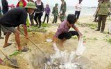 7 nhóm đối tượng được bồi thường do sự cố môi trường biển
