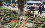 Cắt tỉa, di dời cây cổ thụ phục vụ thi công đường sắt Nhổn - Ga Hà Nội