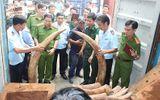 Khởi tố vụ buôn lậu trên 2 tấn ngà voi tại cảng Cát Lái