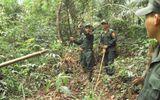 Lực lượng bảo vệ rừng sẽ được trang bị súng, mũ chống đạn