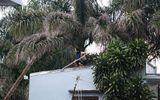 Nam thanh niên nghi ngáo đá cầm dao và gậy sắt cố thủ trên mái nhà