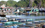 Xuất khẩu thủy sản đạt trên 5,73 tỷ USD