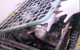 Bắt giữ 3 vụ vận chuyển sản phẩm động vật và gia cầm trên quốc lộ 1A
