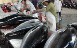 """Thăn, phile cá ngừ Việt Nam """"đắt hàng"""" ở Mỹ"""