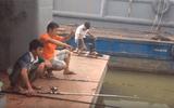 """Clip bộ 3 """"sát thủ"""" câu hàng chục con cá trê trên sông Sài Gòn gây sốt"""