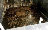 Xác định nguyên nhân khiến 5 công nhân tử vong dưới hầm nước mắm