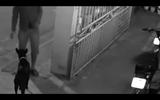 Con chó đứng nhìn nam thanh niên trộm xe đạp điện