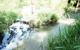 3 tỉnh, thành chậm báo cáo về môi trường sông Thị Vải