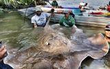 Hiện trường - Cá lại chết hàng loạt trên sông Âm tại tỉnh Thanh Hóa