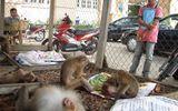 Giải cứu hàng chục khỉ bị nhốt ở khách sạn, quán karaoke