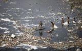 Ô nhiễm môi trường khiến 1,7 triệu trẻ em thiệt mạng mỗi năm