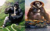 Loạt ảnh chế hài hước khi Kong chuyển