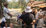 An ninh - Hình sự - Phó Thủ tướng yêu cầu kiểm tra việc phá rừng phòng hộ tại Phú Yên