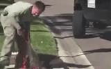 Video-Hot - Người đàn ông tay không lôi xềnh xệch cá sấu dài 3m kẹt dưới cống
