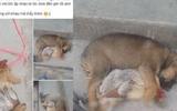 Cộng đồng mạng - Cười ngất với hình ảnh chú chó ôm gà ngủ ngon lành lúc giữa trưa