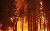 Phó Thủ tướng yêu cầu làm rõ một số vụ phá rừng, cháy rừng