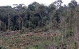 Đình chỉ 3 cán bộ kiểm lâm để mất 50ha rừng ở Đắk Nông
