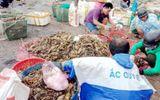Chưa tìm ra nguyên nhân tôm hùm chết hàng loạt ở Phú Yên gây thiệt hại 700 tỷ đồng