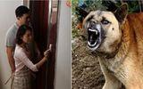 Điên cuồng sủa và ngăn chủ không mở cửa, chú chó đã cứu cả gia đình