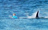 Đời sống - Bị cá mập tấn công, chàng trai đẩy bạn gái xuống biển rồi bơi đi và bài học sâu sắc