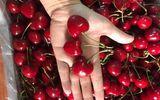 """""""Giật mình"""" giá Cherry Trung Quốc trên thị trường online"""