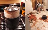 """Cộng đồng mạng - """"Dở khóc dở cười"""" với những thảm họa bếp núc mà không ai muốn nhìn lại"""