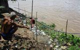 Tin trong nước - Đồng Tháp tiếp tục sạt lở, 5 hộ dân di dời khẩn cấp