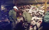 Ecuador bắt tàu Trung Quốc câu trộm 6.623 cá mập