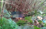 Phát hiện thi thể cụ ông sau 5 tháng mất tích bí ẩn trong rừng