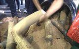 Hàng trăm kg ngà voi giấu tinh vi trong thùng phuy nhựa đường