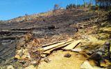 Tìm con đường lâm tặc đột nhập dễ dàng đốn gọn 43,7ha rừng
