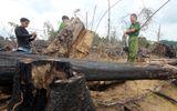 Khởi tố vụ án phá rừng phòng hộ ở Quảng Nam