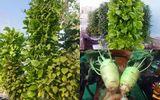 Đời sống - Ngắm vườn rau vô địch Sài thành của ông bố trẻ, cứ 1m vuông thu hoạch 40kg rau sạch
