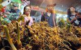 Sâm Ngọc Linh có giá gần 3 cây vàng chuẩn bị rao bán