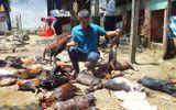Khí amoniac rò rỉ khiến chó gà chết la liệt, 1.300 người được sơ tán khẩn cấp