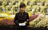Bà Park Geun-hye bị nghi ngờ nói dối về thảm kịch chìm phà Sewol