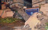 Cây cổ thụ bất ngờ bật gốc, đè sập cổng trường Đại học Sài Gòn