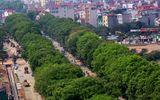 Hà Nội di dời, chặt hạ hơn 1.000 cây cổ thụ trên đường Phạm Văn Đồng