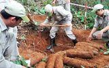Phát hiện hầm chứa 27 quả đạn pháo 105 mm trong vườn nhà dân