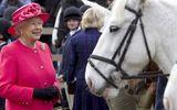 Nữ hoàng Anh kiếm được gần 9 triệu USD tiền thưởng đua ngựa