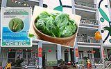 Rau tồn dư thuốc bảo vệ thực vật tại trường Hoàng Liệt: Kết quả chi tiết sẽ thế nào?
