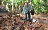 Cả làng thành thành tỷ phú nhờ nuôi gà ta thả vườn