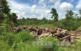 Kiểm điểm trách nhiệm cá nhân, tập thể vụ khai thác gỗ trái phép tại Đắk Lắk